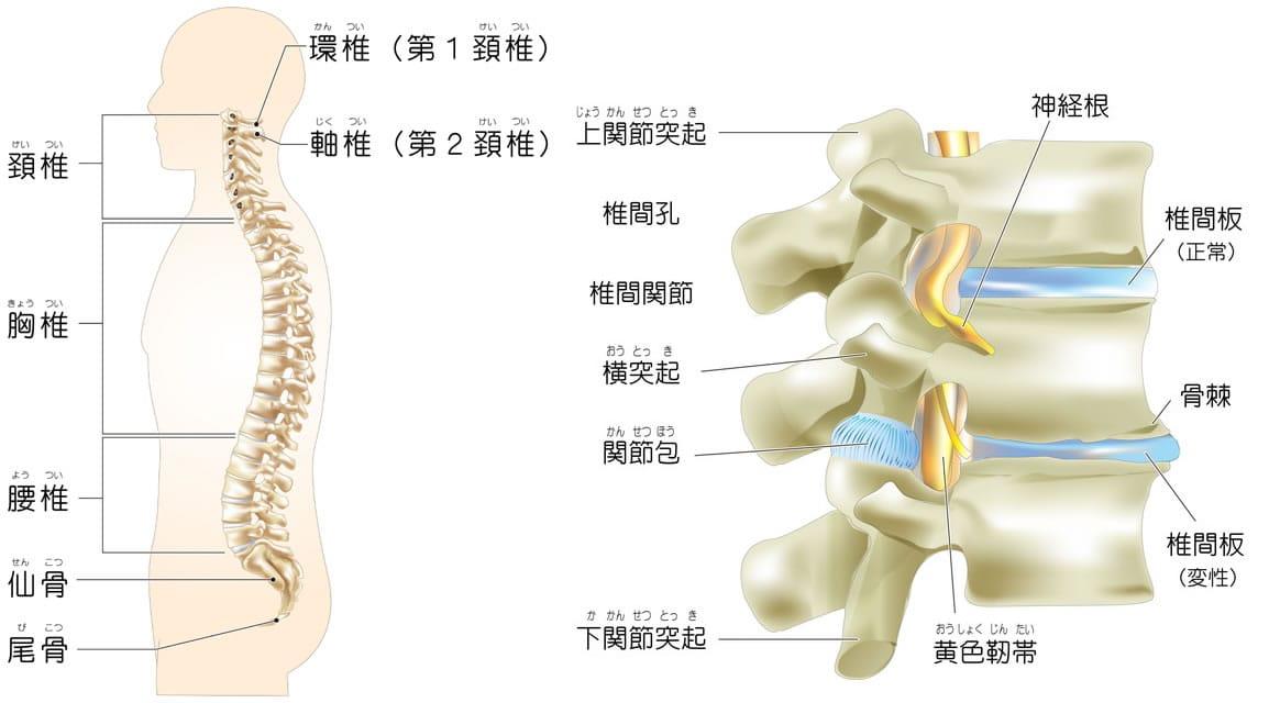 黄色靭帯骨化症
